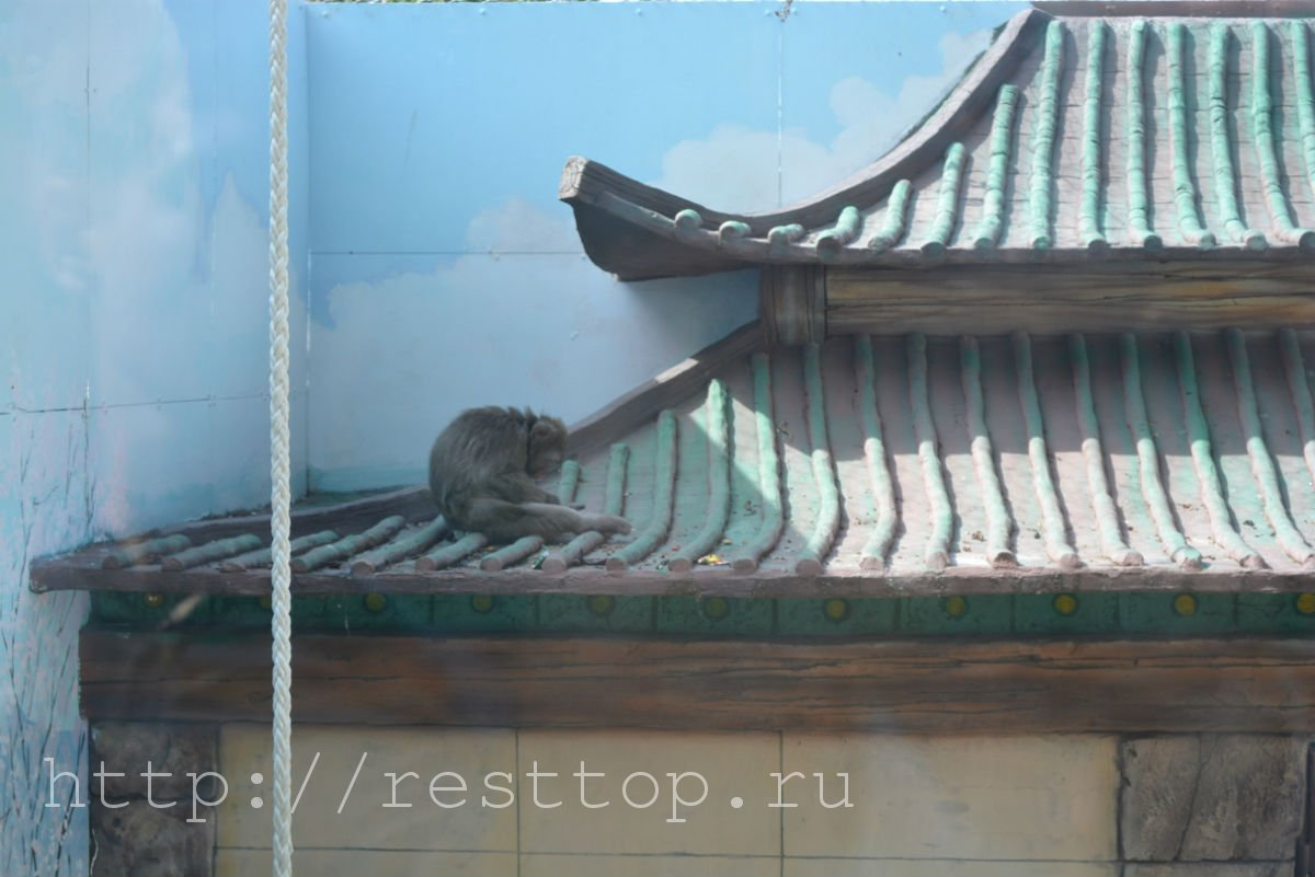 зоосад на воронеже хабаровск resttop.ru 15