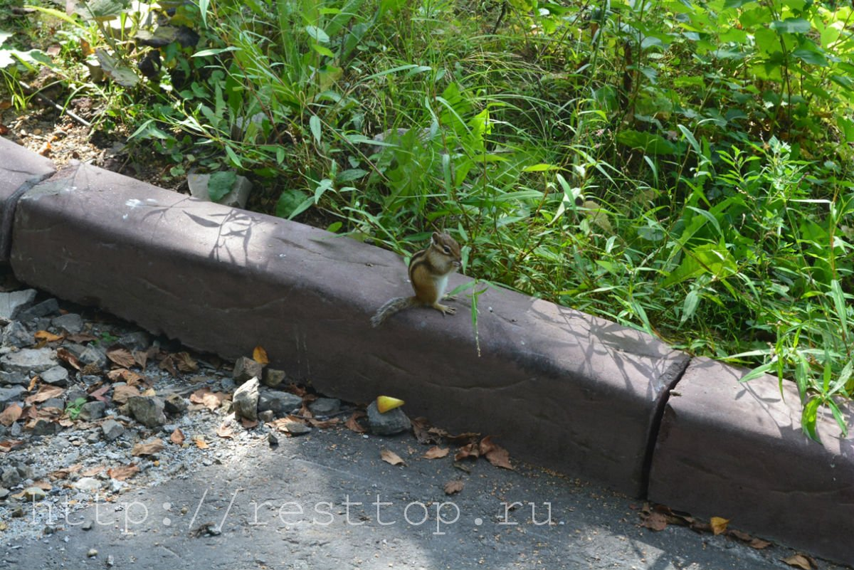 зоосад на воронеже хабаровск resttop.ru 33