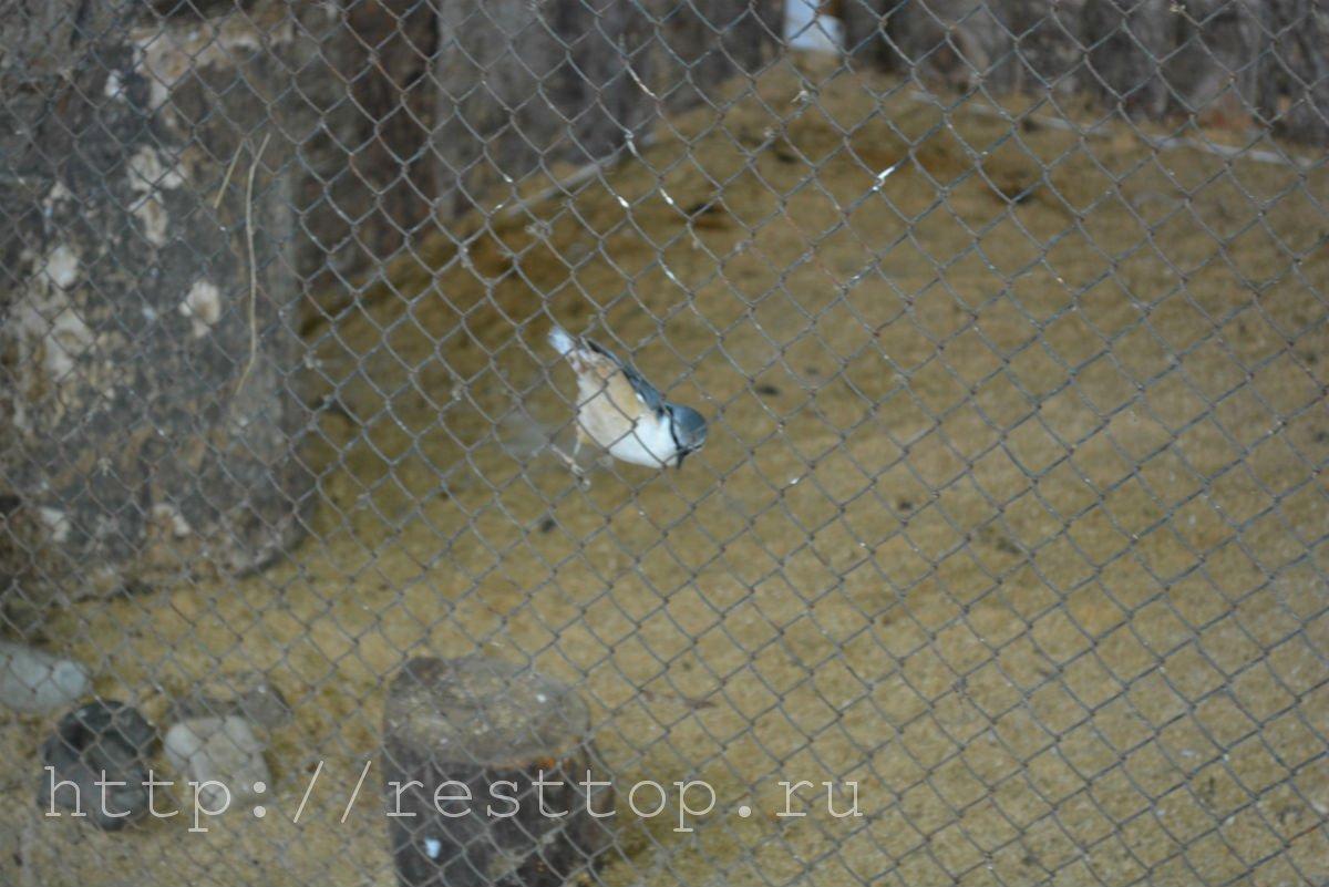 зоосад на воронеже хабаровск resttop.ru 44