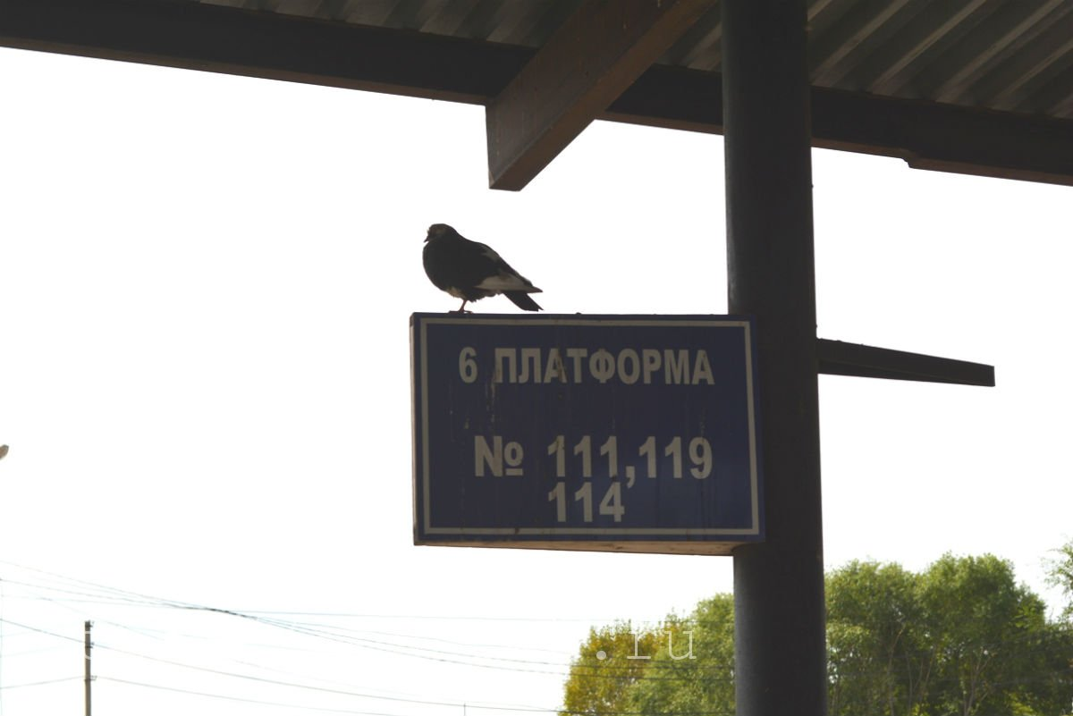 зоосад на воронеже хабаровск resttop.ru