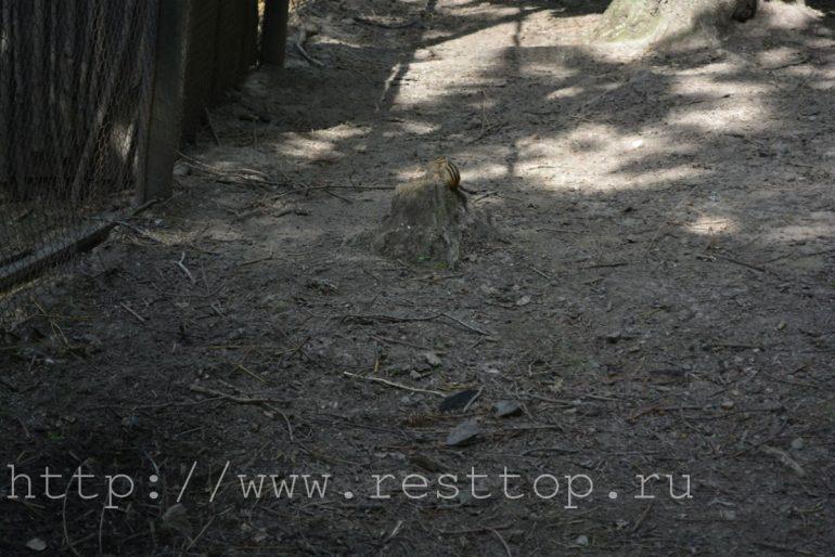 зоосад приамурский хабаровск 13 resttop.ru