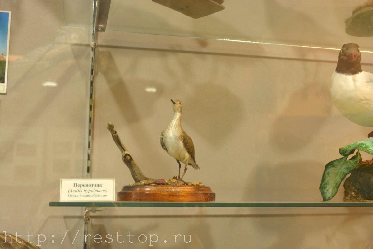 Краеведческий музей имени Гродекова Хабаровск новый корпус-7