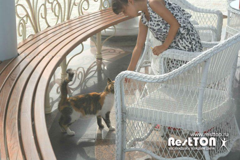 кот ривьера парк хабаровск