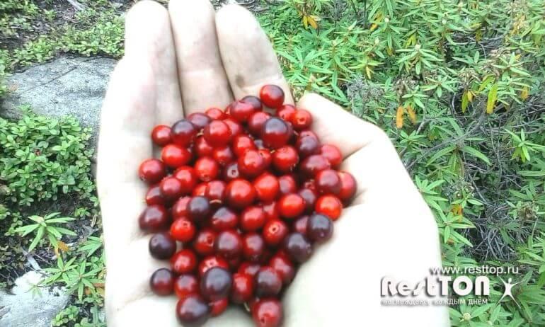 ягоды озеро Амут Хабаровский край фото